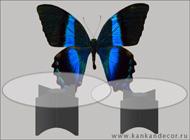 http://www.kankandecor.ru/data/uploads/images/nagradi.jpg